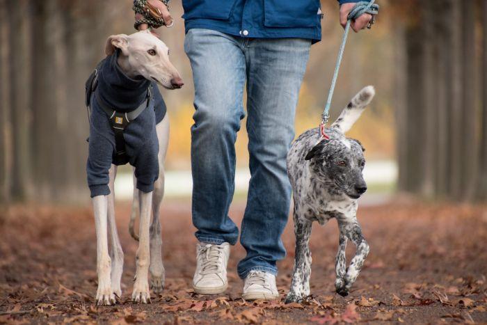 Ce simt câinii când îi pupi. Câini care au ieșit la plimbare cu stăpânul
